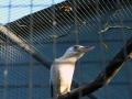 Olmense-Zoo-10-11-2013-(85)