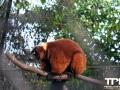 Olmense-Zoo-10-11-2013-(96)