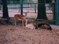 zoo-524x392