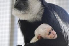 New baby's_Pairi Daiza3