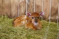 New baby's_Pairi Daiza7