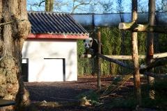 Tian Bao Discovering New Enclosure10