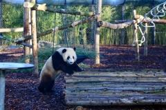 Tian Bao Discovering New Enclosure12
