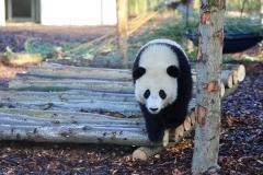 Tian Bao Discovering New Enclosure14