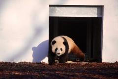Tian Bao Discovering New Enclosure3