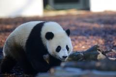 Tian Bao Discovering New Enclosure5