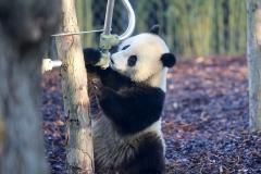 Tian Bao Discovering New Enclosure8