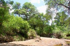 Caatinga-desert-in-Brazil-2