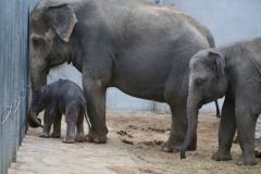 Pairi Daiza_ElephantDay13
