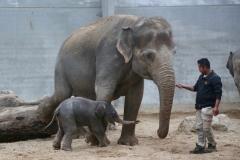 Pairi Daiza_ElephantDay15
