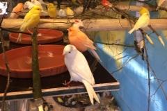 Saved birds 2