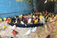 Saved birds 4