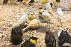 Saved birds 5