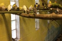 Saved birds 6