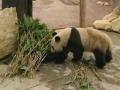 800x533_panda-bamboe