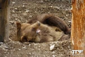 Parc animalier de Bouillon - maart 2021