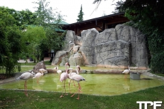 Parco-Faunistico-le-Cornelle-26