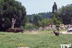 Parco-Natura-Viva-5