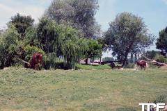 Parco-Natura-Viva-7