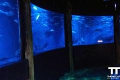 Sea-life-Oberhausen-(12)