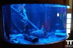 Sea-life-Oberhausen-(23)