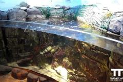 Sea-life-Oberhausen-(6)