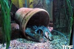Sea-Life-Timmendorfer-Strand-(15)