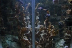 Sea-Life-Timmendorfer-Strand-(23)