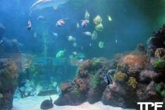 Sea-Life-Timmendorfer-Strand-(29)