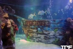 Sea-Life-Timmendorfer-Strand-(31)