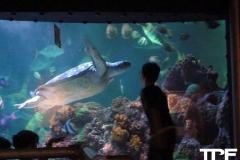 Sea-Life-Timmendorfer-Strand-(32)