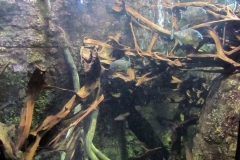 Sea-Life-Timmendorfer-Strand-(8)