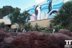 Sea-World-San-Diego-(11)