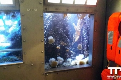 sealife-(12)