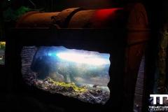 sealife-(15)