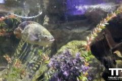 sealife-(21)