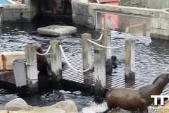 sealife-(25)