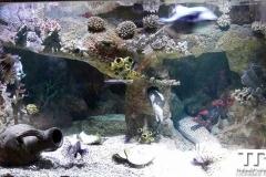 sealife-(3)