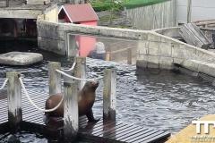 sealife-(32)