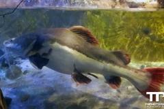 sealife-(37)