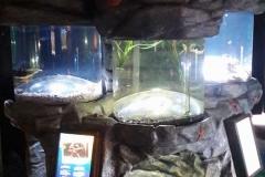 sealife-(44)