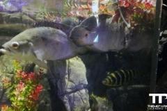 sealife-(47)