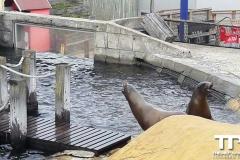 sealife-(49)
