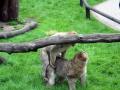 Serengeti-Park-18-05-2014-(191)