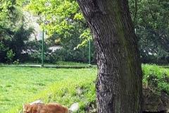 Śląskie-Zoo-12