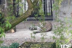 Śląskie-Zoo-14