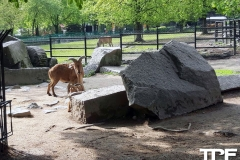 Śląskie-Zoo-15