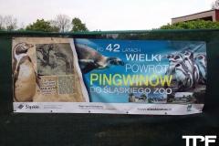 Śląskie-Zoo-16