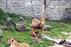 Śląskie-Zoo-19