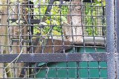 Śląskie-Zoo-2